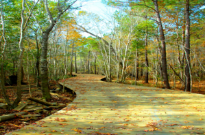 Wooden walkway at Brunswick Forest
