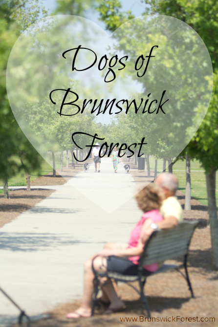 Dogs of Brunswick Forest