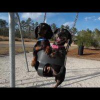 Dog Park at Brunswick Forest