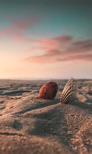 seashells at ground level with a beautiful sunset in the background