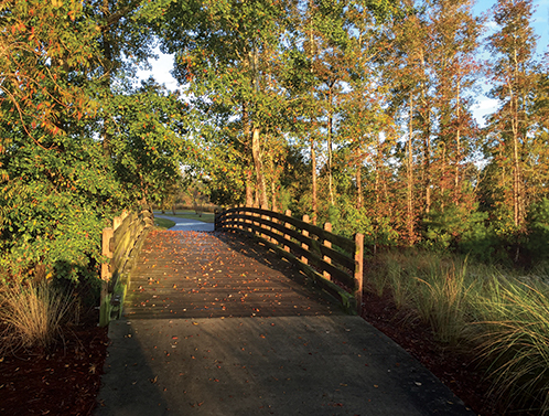 Empty bridge surrounded by nature - Low Noise Levels in Brunswick Forest Blog Featured Photo